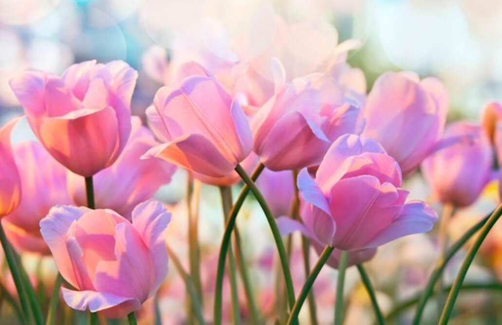 Свято 8 березня – подарунок для жінок.